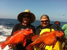 Big reds on the NDM