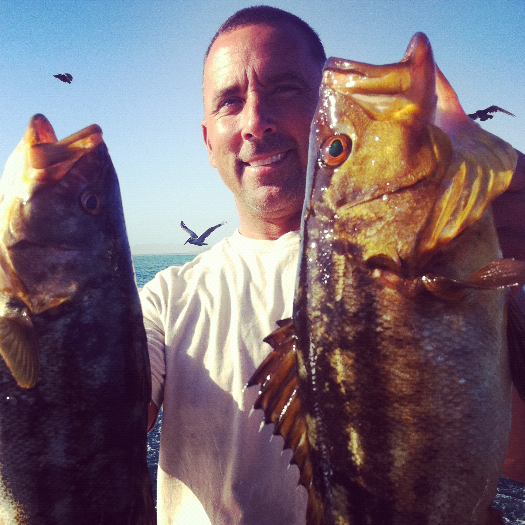 The top 10 extra salty edition socalsalty for Point loma fish count