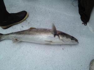 Capt. Matt's fish